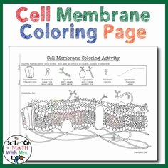 Cell Membrane Coloring Worksheet Answers New 1000 Images About High School Science with Mrs Lau On