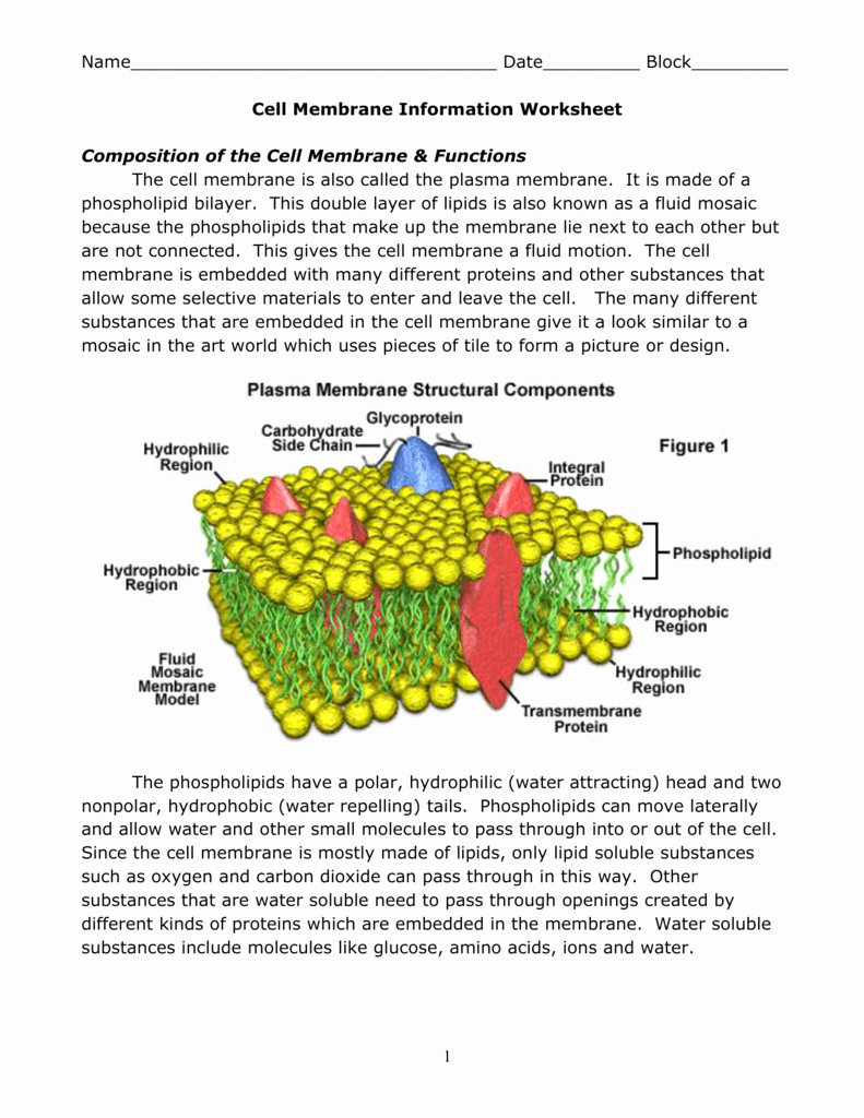 Cell Membrane Coloring Worksheet Answers New Worksheet Cell Membrane Worksheet Grass Fedjp Worksheet