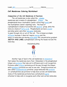 Cell Membrane Coloring Worksheet Beautiful Cell Membrane Answer Key