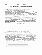 Cell Membrane Coloring Worksheet Fresh Cell Membrane Coloring Worksheet Key Name Key Date