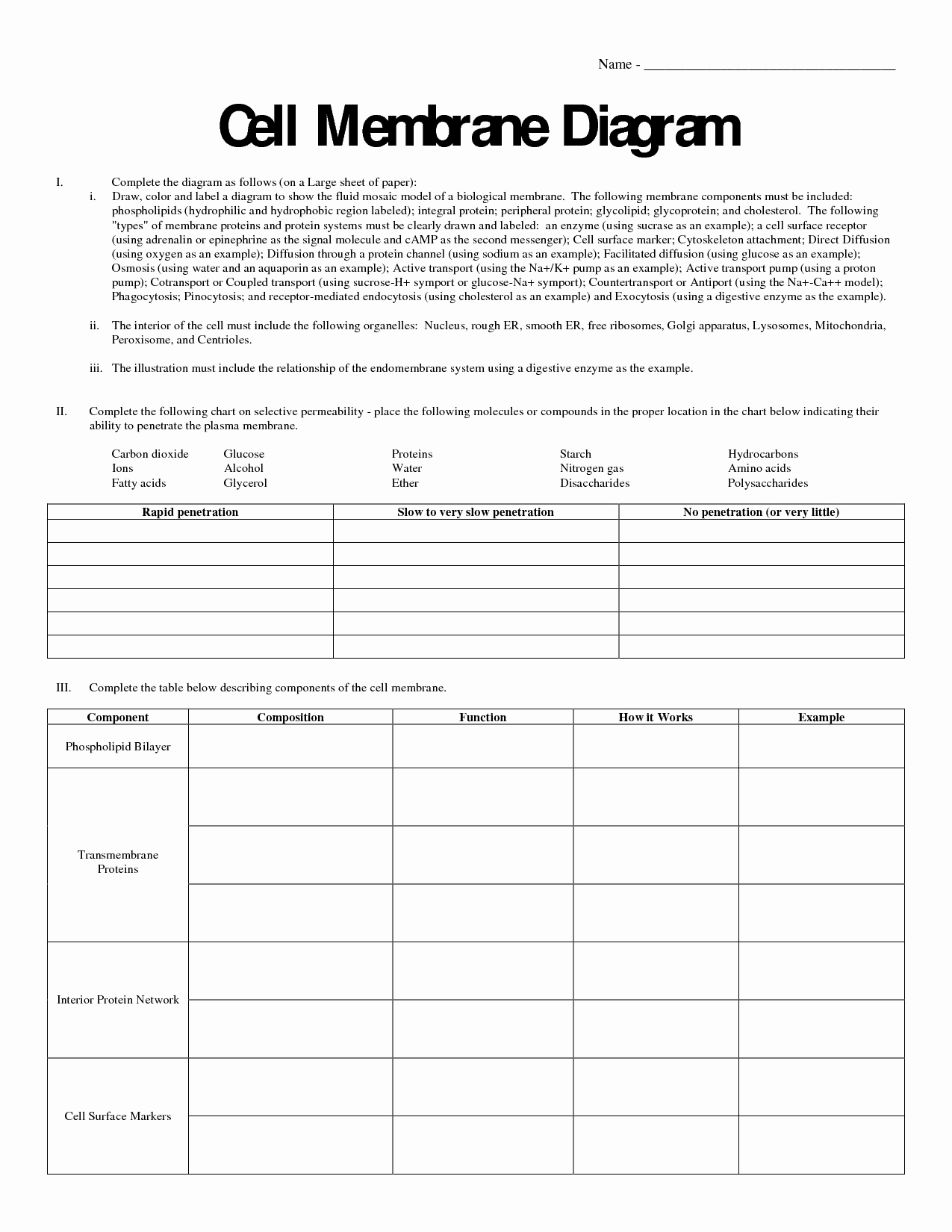 Cell Membrane Coloring Worksheet Inspirational 10 Best Of Cell Membrane Diagram Worksheet Cell