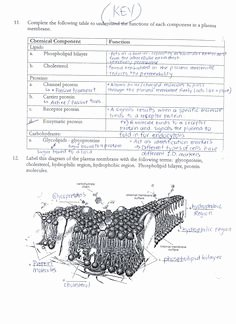 Cell Membrane Coloring Worksheet Inspirational Cell Transport Worksheet Osmosis Diffusion