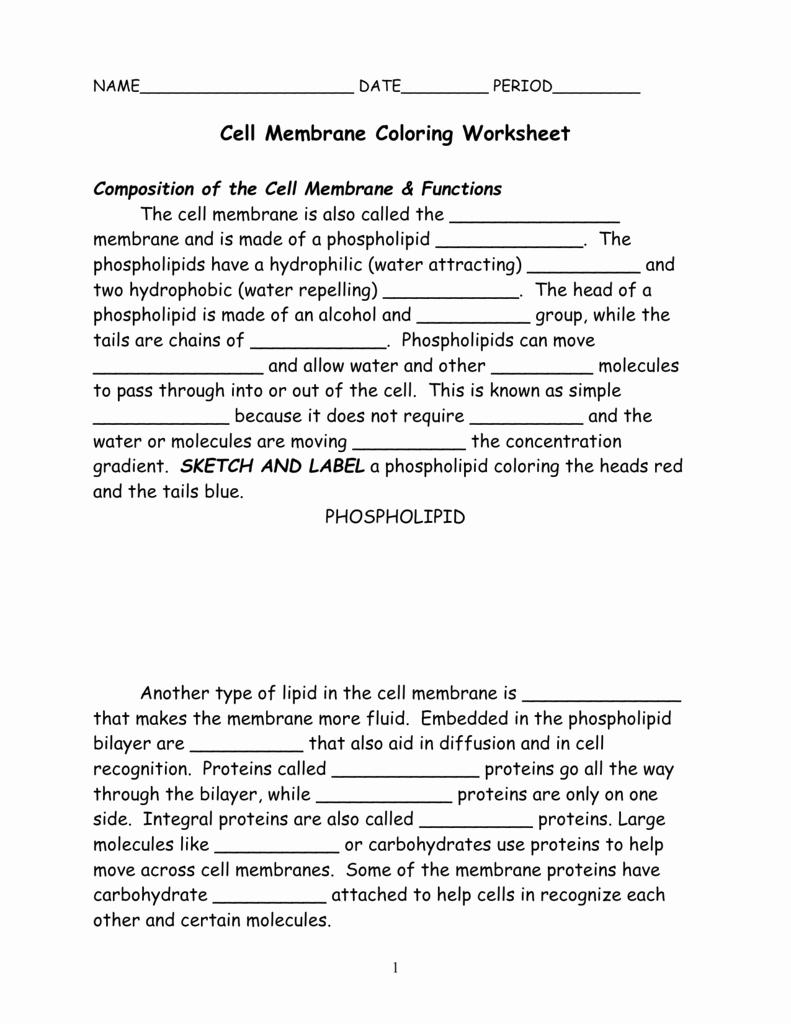 Cell Membrane Coloring Worksheet Lovely Cell Membrane Coloring Worksheet Position Of the Cell