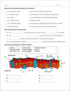 Cell Membrane Images Worksheet Answers Awesome Cell Membrane Coloring Worksheet Answer Key