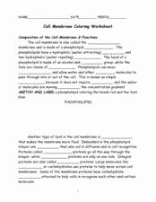 Cell Membrane Images Worksheet Answers Fresh Cell Membrane Coloring Worksheet 7th 9th Grade Worksheet