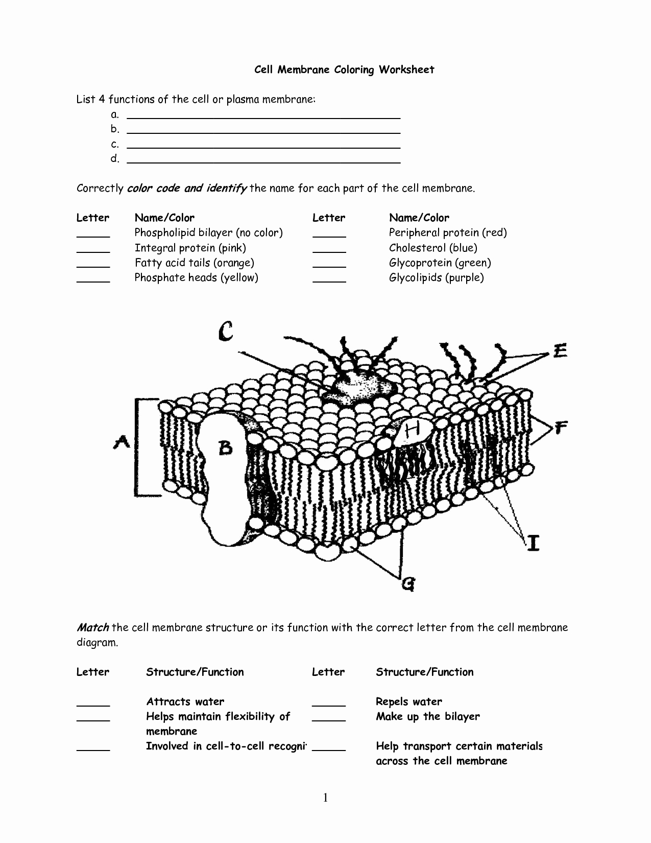 Cell Membrane Images Worksheet Answers Luxury 10 Best Of Cell Membrane Diagram Worksheet Cell