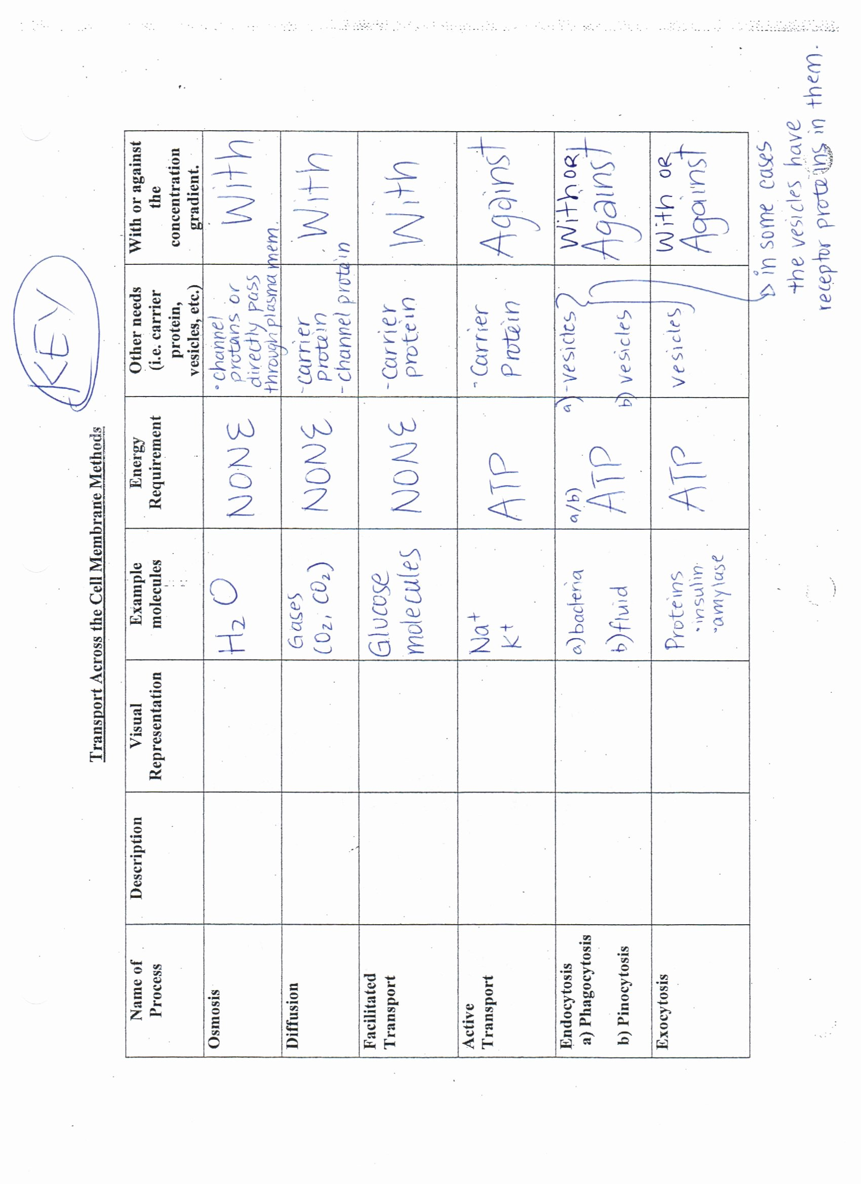 Cell Membrane Images Worksheet Answers Luxury Answer Keys Cell Membrane Worksheets