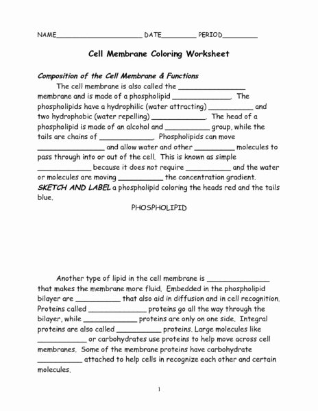 Cell Membrane Worksheet Answers Best Of Cell Membrane Coloring Worksheet Worksheet for 7th 9th