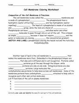 Cell Membrane Worksheet Answers Elegant Cell Membrane Answer Key