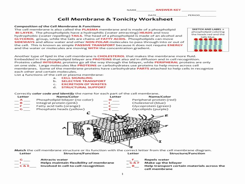 Cell Membrane Worksheet Answers Inspirational Cell Membrane and tonicity Worksheet Answers the Best