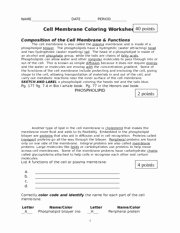 Cell Membrane Worksheet Answers Lovely Cell Membrane Coloring Worksheet Name Key Date Period