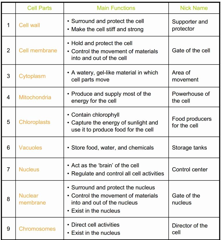 Cell organelles Worksheet Answer Key Lovely Cell organelles and their Functions Worksheet Answer Key