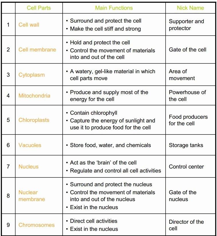 Cell organelles Worksheet Answer Key Lovely Cell organelles Coloring Worksheet