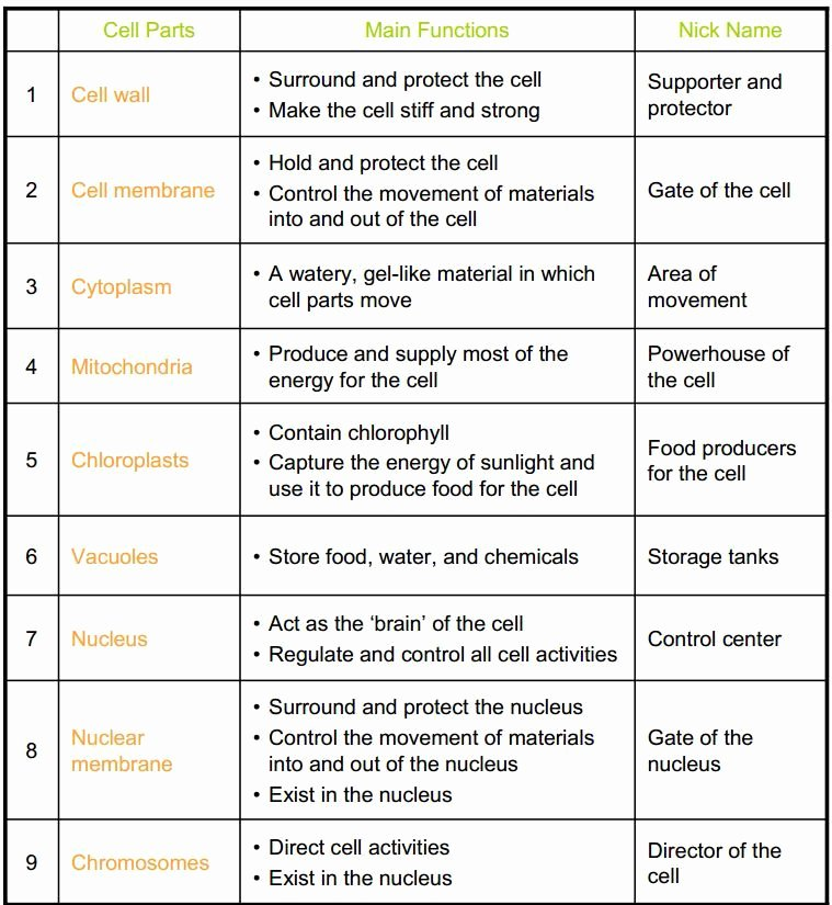 Cell Structure and Function Worksheet Fresh Cell organelles Coloring Worksheet