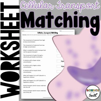 Cell Transport Review Worksheet Beautiful Cell Transport Matching Worksheet for Review or assessment