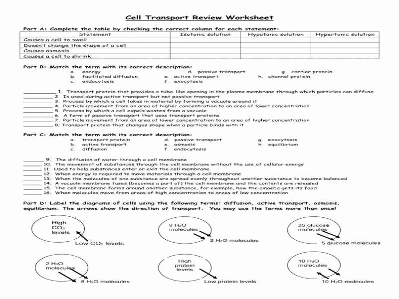 Cell Transport Review Worksheet Best Of Cell Transport Worksheet Answers