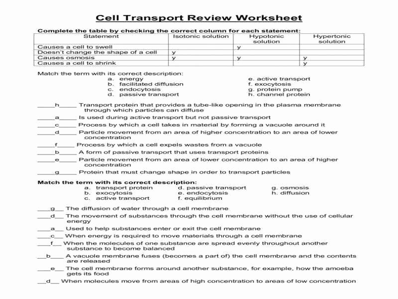 Cell Transport Review Worksheet Best Of Cellular Transport Worksheet