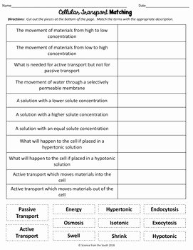Cell Transport Review Worksheet Elegant Cell Transport Matching Worksheet for Review or assessment