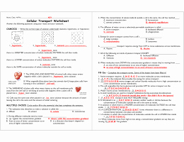 Cell Transport Review Worksheet New Cell Transport Review Worksheet