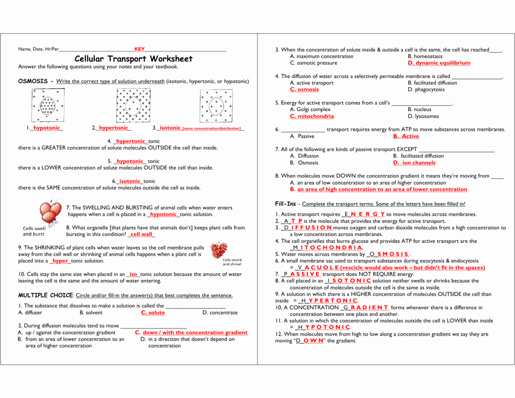 Cell Transport Worksheet Answers Best Of Cellular Transport Worksheet