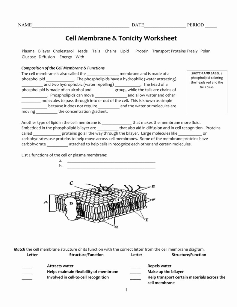 Cell Transport Worksheet Answers Unique Cell Membrane & tonicity Worksheet