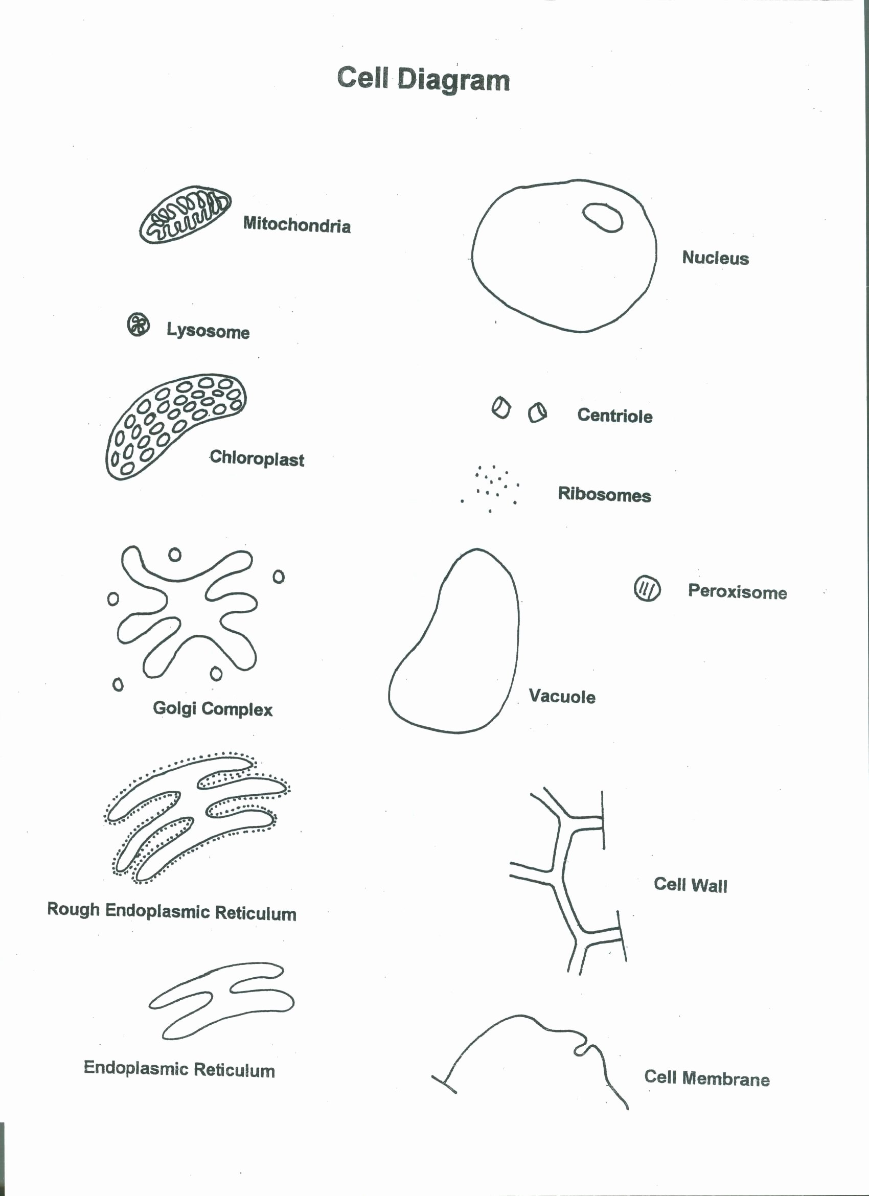 Cells Alive Worksheet Answer Key Fresh Cells Alive Plant Cell Worksheet Answer Key