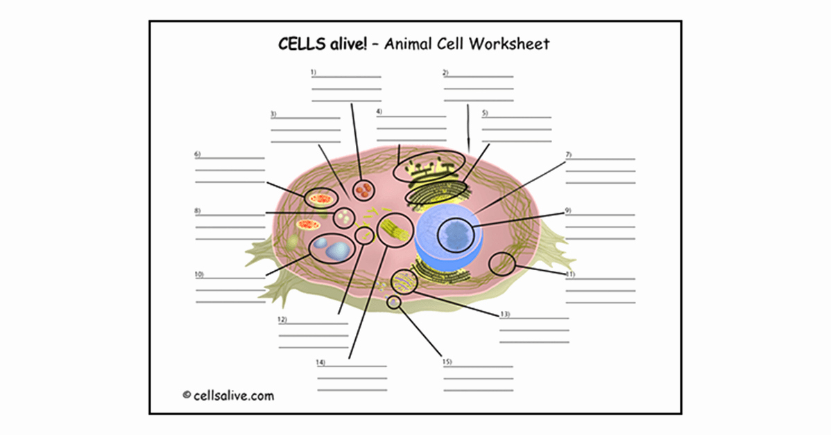 Cells Alive Worksheet Answer Key Unique Cells Alive Study Aids