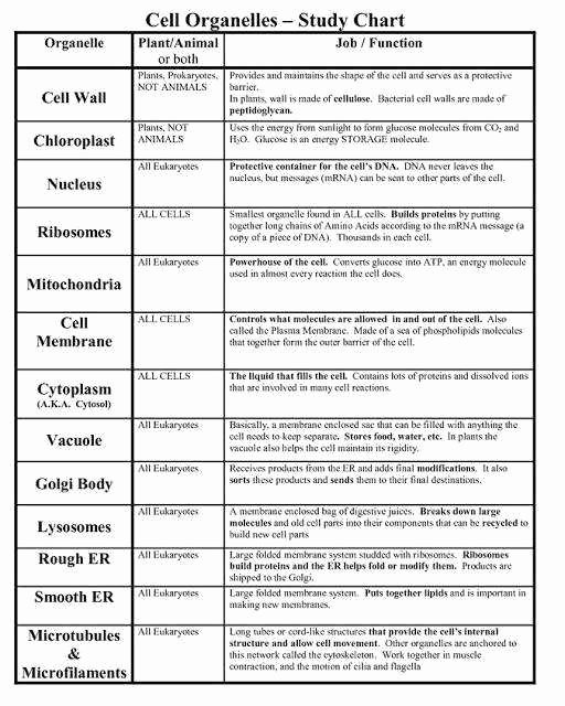 Cells and their organelles Worksheet Elegant Cells and their organelles Worksheet