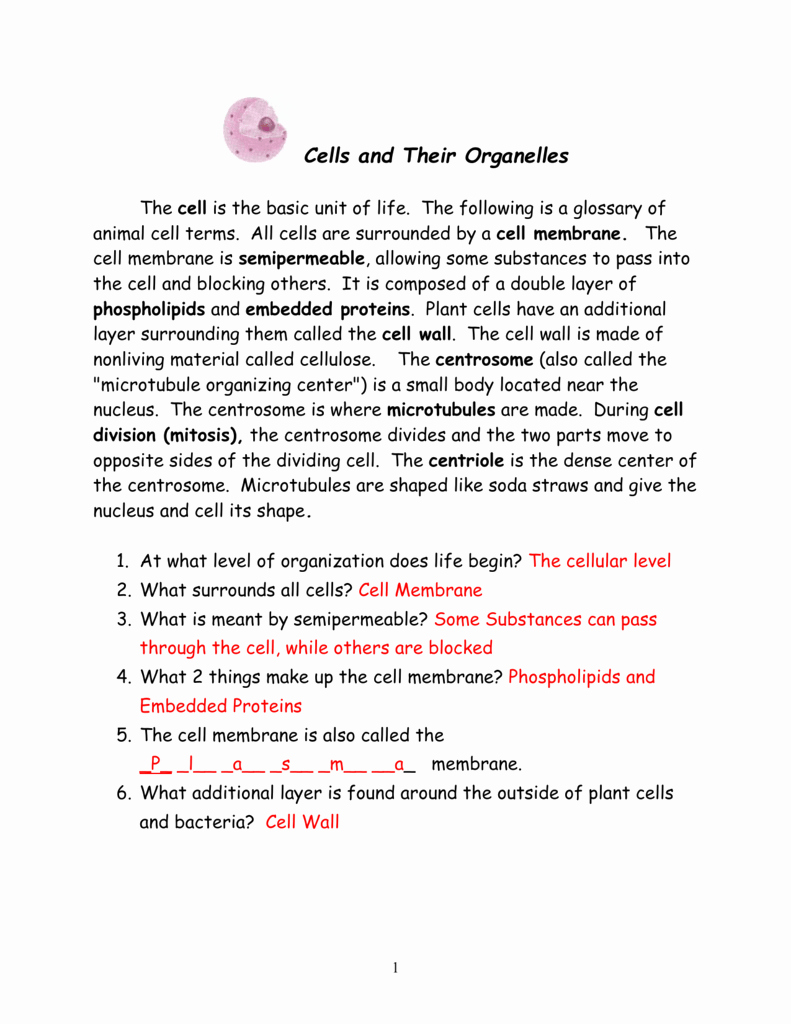 Cells and their organelles Worksheet Luxury Cell Packet Answers – Worksheets Samples