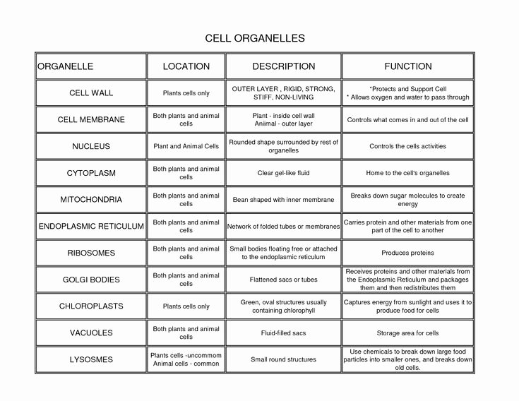 Cells and their organelles Worksheet Unique Cell organelles Locations Description and Functions
