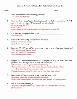 Cellular Respiration Review Worksheet Awesome Cellular Respiration Review Worksheet Answer Key