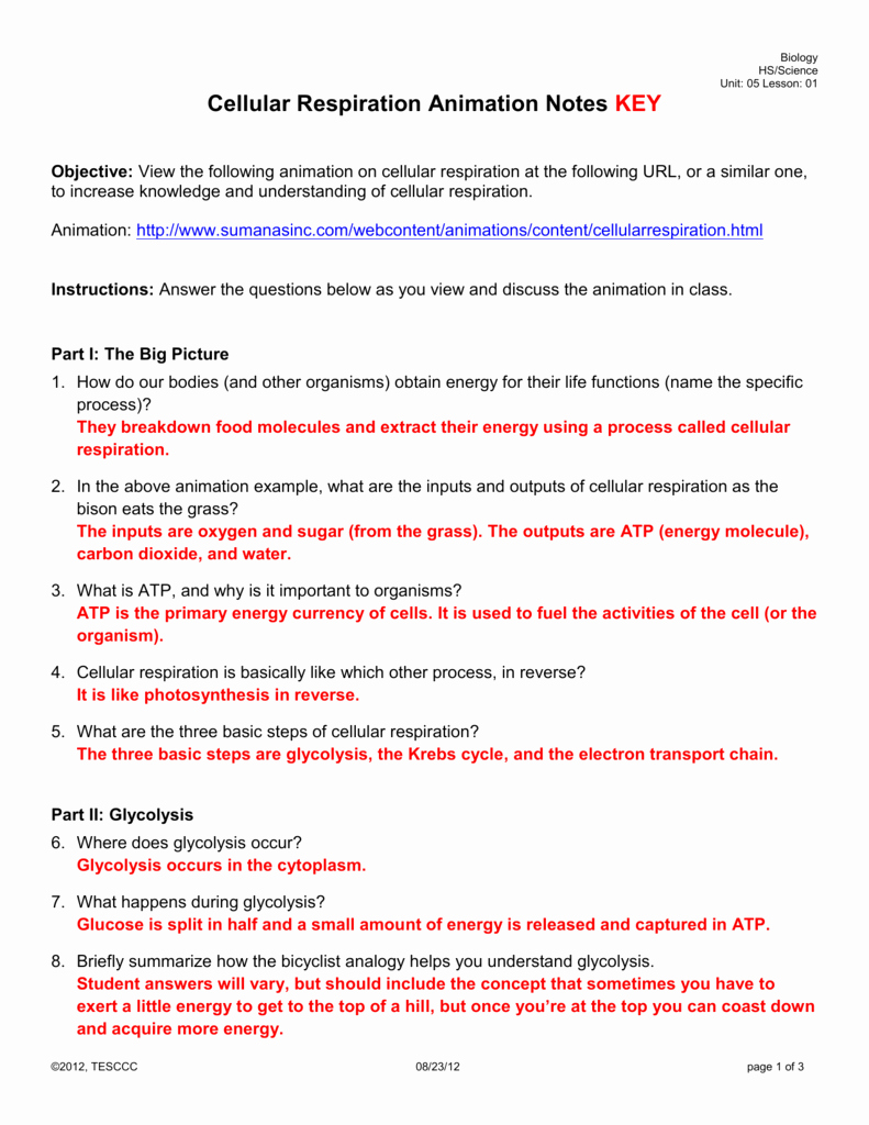 Cellular Respiration Review Worksheet Inspirational Worksheet Cellular Respiration and Cell Energy Biology