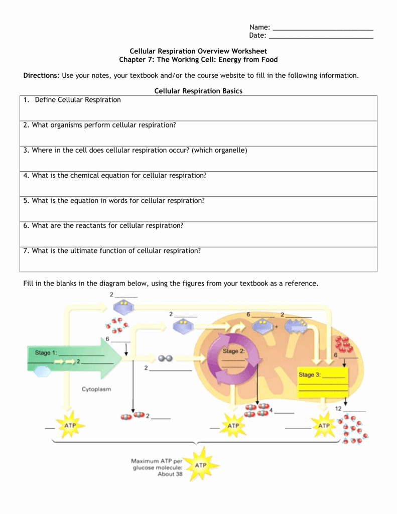Cellular Respiration Worksheet Key Fresh Cellular Respiration Overview Worksheet Chapter 7