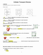 Cellular Transport Worksheet Answers New Cell Review Study Guide Key Name Date Period Cell