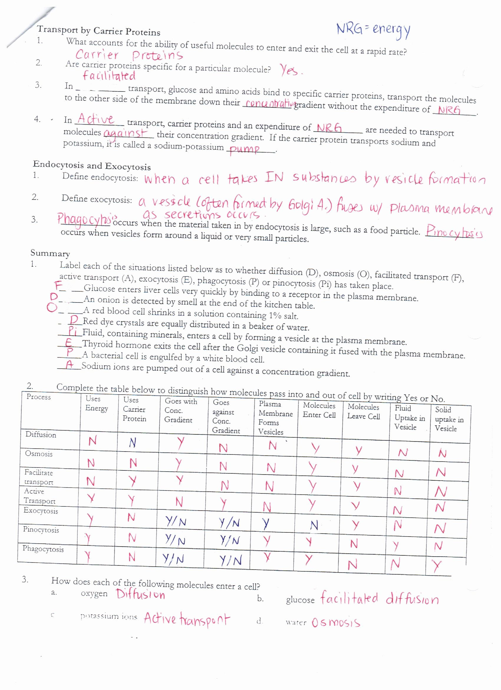 Cellular Transport Worksheet Answers Unique Answer Keys Cell Membrane Worksheets