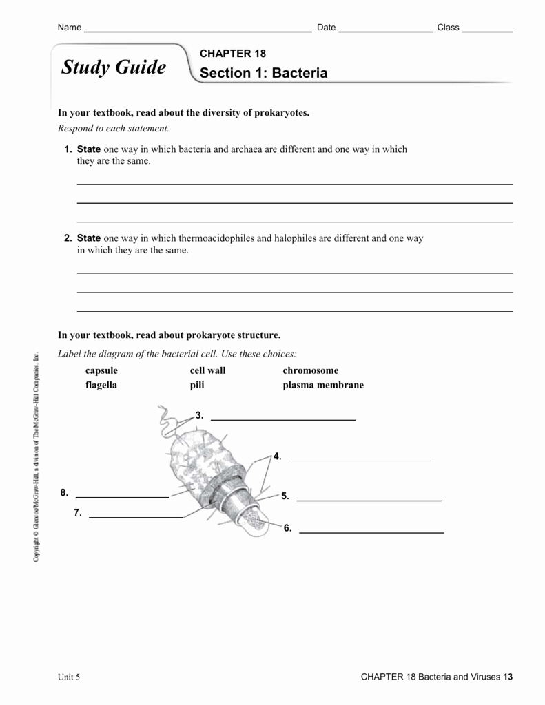 Characteristics Of Bacteria Worksheet Beautiful Worksheet Virus and Bacteria Worksheet Grass Fedjp
