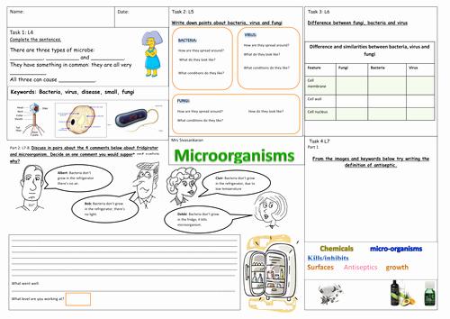 Characteristics Of Bacteria Worksheet Elegant Microorganism by Svinthiya