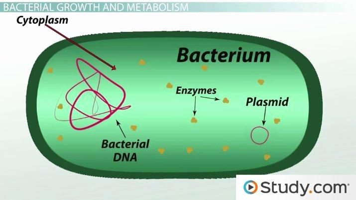 Characteristics Of Bacteria Worksheet Inspirational What is Bacteria Definition Characteristics & Examples