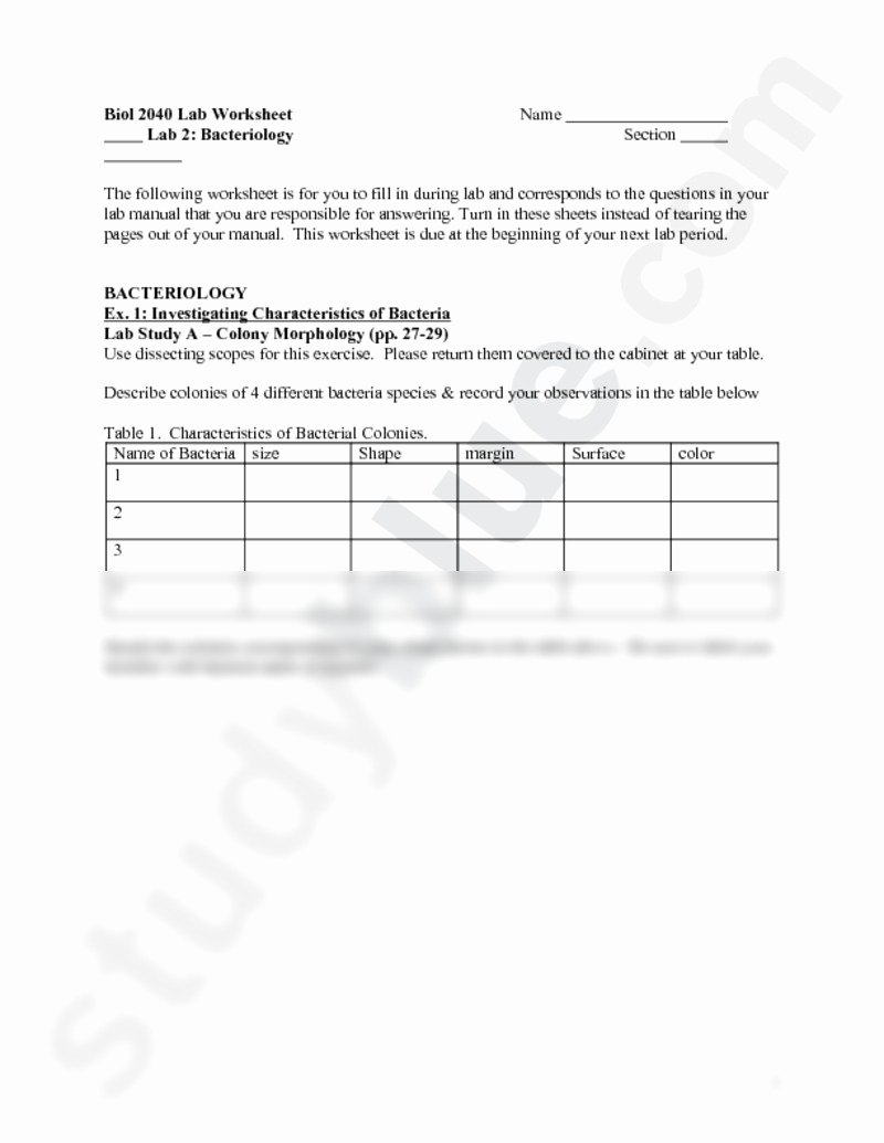 Characteristics Of Bacteria Worksheet Luxury Lab 2 Worksheetc Biology 204 with Kopeny at