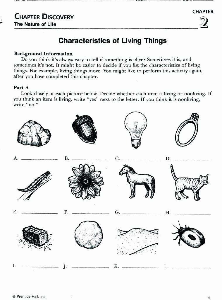 Characteristics Of Life Worksheet Answers Awesome Characteristics Life Worksheet