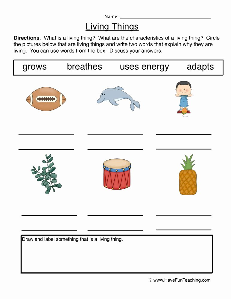 Characteristics Of Life Worksheet Beautiful Characteristics Living Things Worksheet 1 Describe
