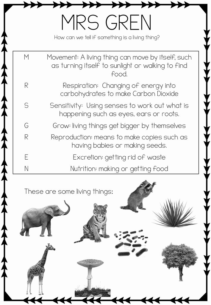 Characteristics Of Life Worksheet Beautiful Mrs Gren Worksheet All About Science