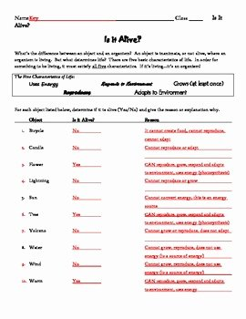 Characteristics Of Life Worksheet Lovely is It Alive Characteristics Of Life Worksheet by Patton