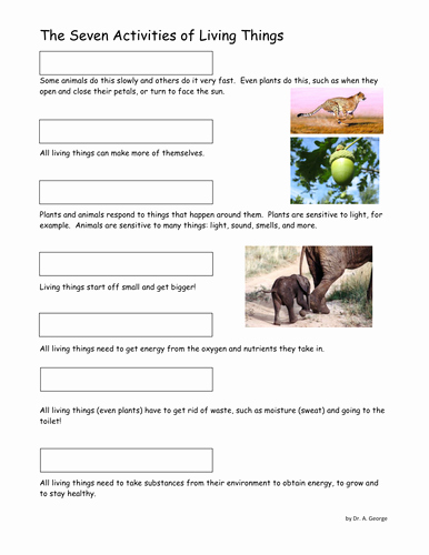 Characteristics Of Living Things Worksheet Beautiful Seven Characteristics Of Living Things Ws Ks3 by Pand