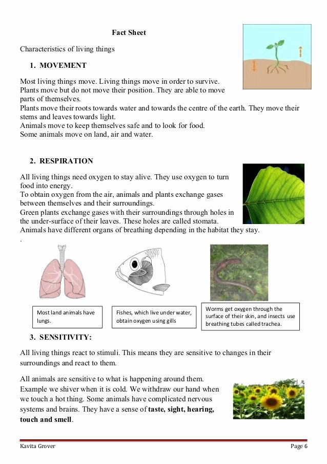Characteristics Of Living Things Worksheet Best Of Lesson Plan and Worksheets On Characteristics Of Living Lhings