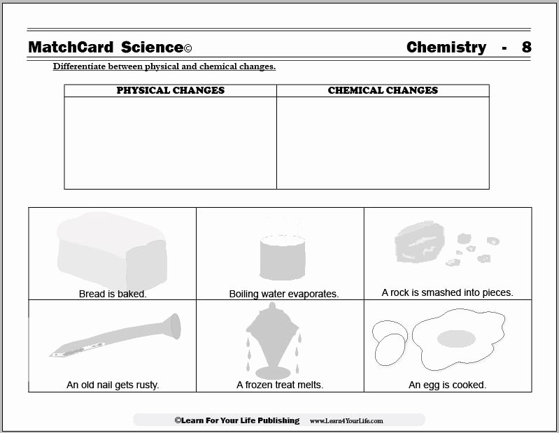 Chemical and Physical Change Worksheet Awesome 14 Best Of Life Science Worksheets Printable Free