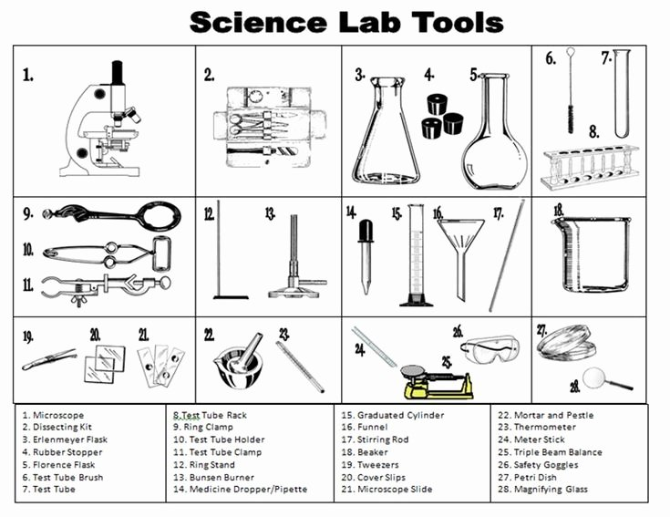 Chemistry Lab Equipment Worksheet Lovely the 25 Best Science tools Foldable Ideas On Pinterest