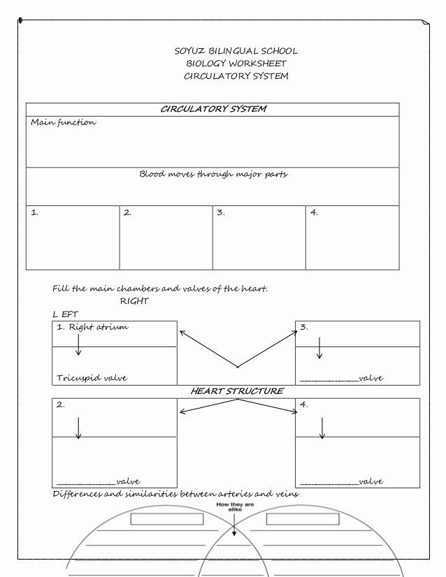 Circulatory System Worksheet Answers Beautiful Circulatory System Worksheet
