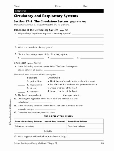 Circulatory System Worksheet Answers Beautiful Science Quiz for Grade 5 Respiratory System Heart and