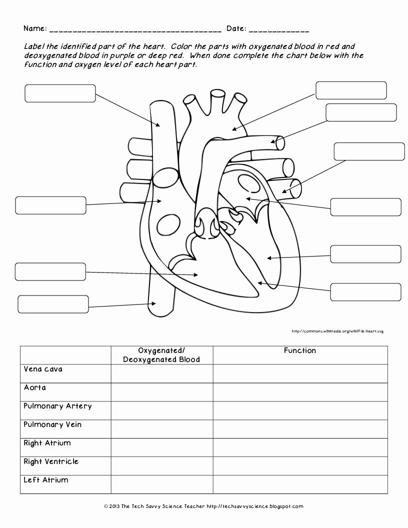 Circulatory System Worksheet Answers Elegant Image Result for Circulatory System Worksheet